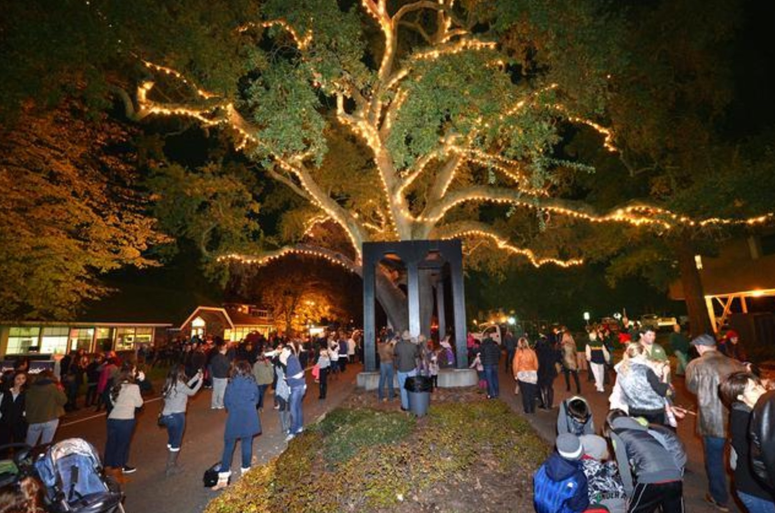 Lighting of Old Oak Tree link